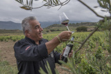 Grapes House of Wines nv Rotem-Dilsen